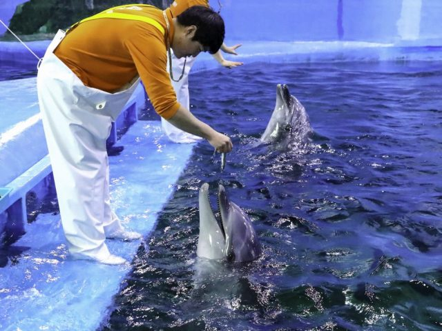 """꼬마돌고래 '고장수', 고래생태체험관서 """"공개"""""""
