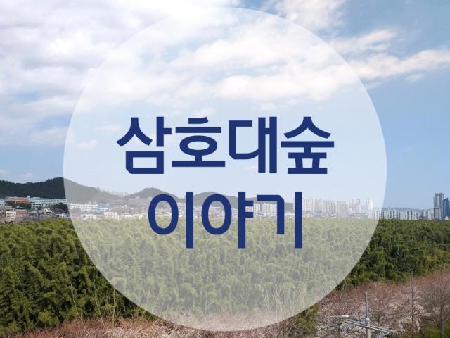 [명예 기자] 삼호대숲 이야기