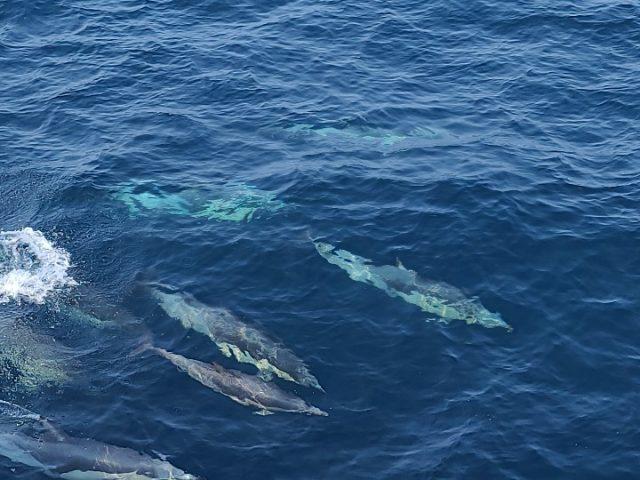 고래바다여행선 올해 첫 참돌고래떼 발견