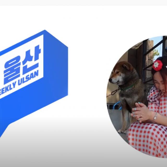 [위클리울산]노잼탈출! 울산 남구 영상공모전 소식/랜선으로 만나는 힐링음악회/고래바다여행선 운항재개소식!