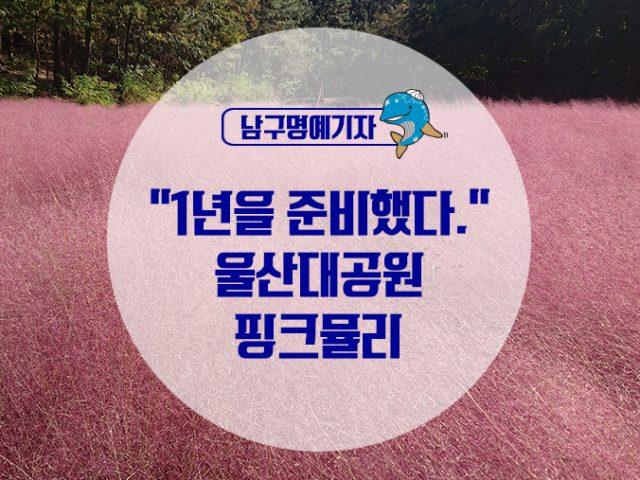 """[명예기자] """"1년을 준비했다."""" 울산대공원 핑크뮬리"""