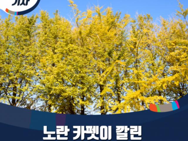 [블로그 기자] 노란 카펫이 깔린 은행나무 정원